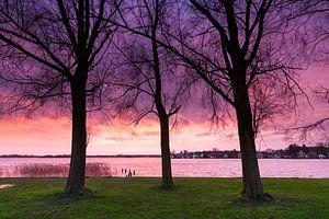 Bomen in het paars van