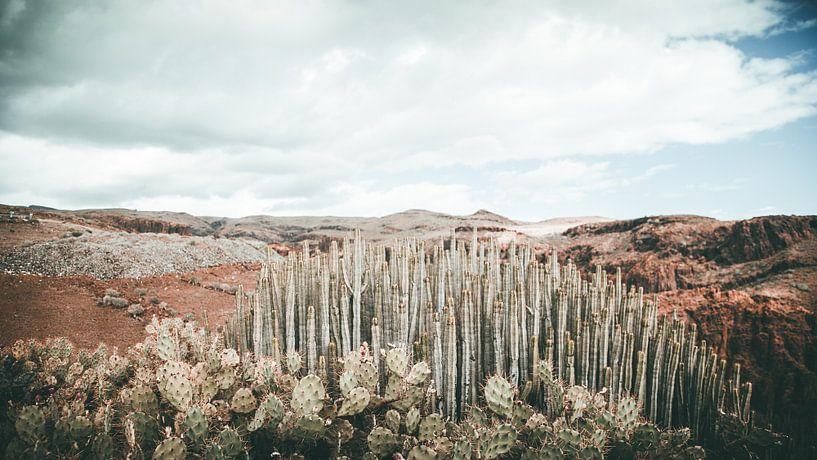 cactus landschap sur Jonathan van Rijn