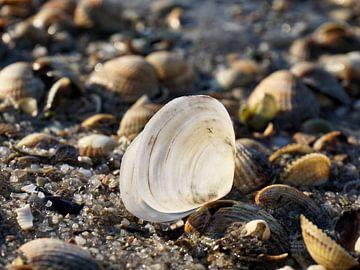 Weiße Muschel von Lea-Marie Littwin