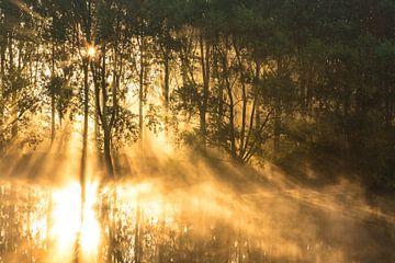 Reflexionen bei Sonnenaufgang von Paul Begijn