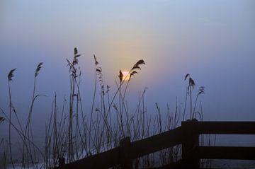 Riet opgangde zon  van Robert Lotman