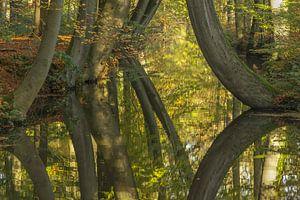 Spiegelbomen van Jan Dolfing