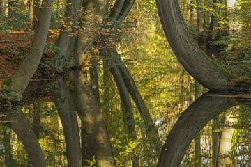 Spiegelbomen von Jan Dolfing