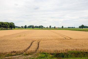 Des traces de roues dans le grain sur un champ hollandais sur Ruud Morijn
