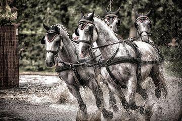 Paardenkracht van Oscar de Wit-Snijder