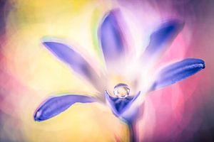 Druppel op een bloem van