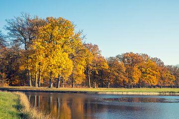 Autumn Trees van Casper De Graaf