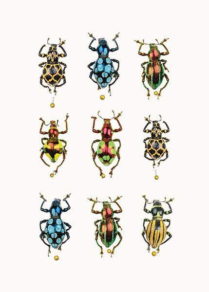 Rariteitenkabinet_Insecten_05 van Marielle Leenders