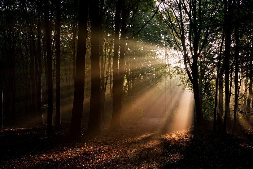 Zonsopgang in het bos van Ton de Koning