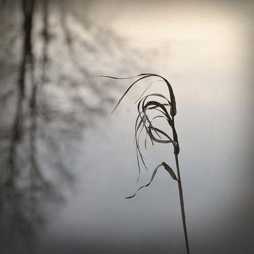 In The Wind von Lena Weisbek