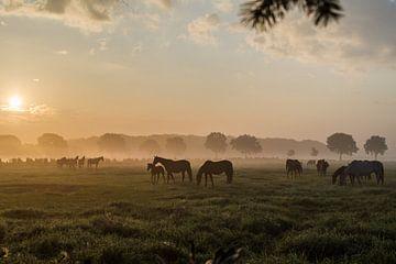 Ochtendzon in Eersel von Danielle Klaver-Overdijk