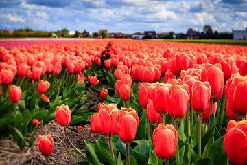 Nederlandse tulpen in bloei van Dutch Creator