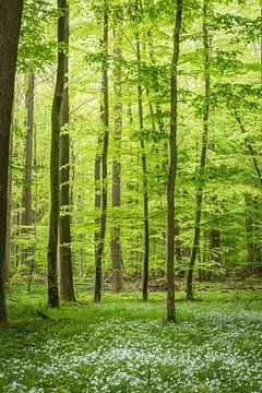 Frühling im grünen Wald von Tobias Luxberg