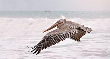 Pelikaan vliegend boven zee van Anouschka Hendriks