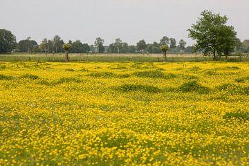 Gele bloemen sur Jim van Iterson