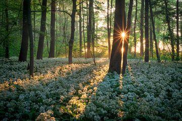 Le soleil levant dans la forêt