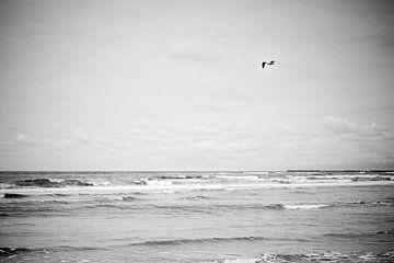 De zee en de meeuw van Lieke Spijker