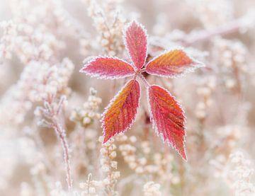 A touch of frost van Connie de Graaf