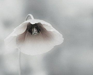 Vergängliche Schönheit, Piet Flour von 1x