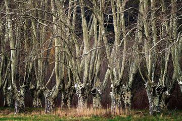 Verborgene Wälder Nr. 4 sur Lars van de Goor