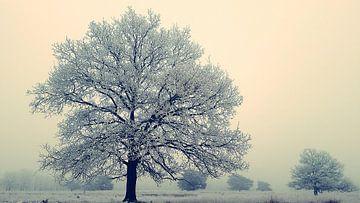 Winter op het Doldersumseveld van Elfriede de Jonge Boeree