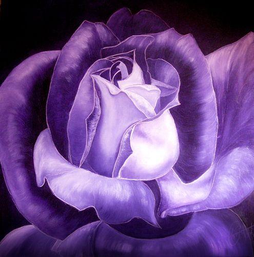 Paars/zwart - Purple Black