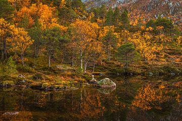 Herbstliche Farben von Freek van den Driesschen