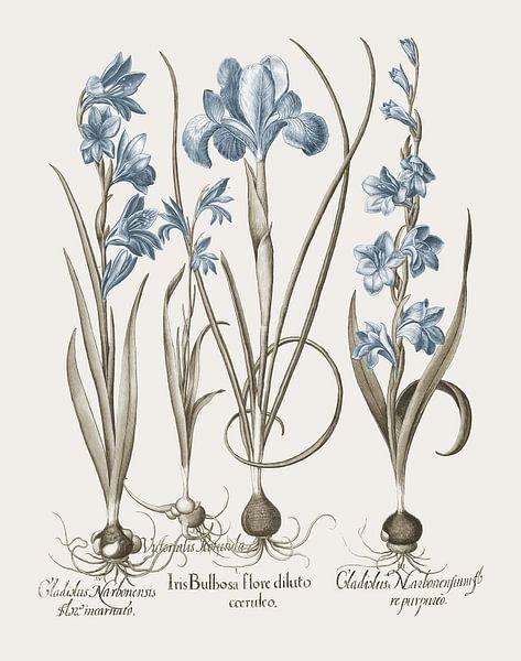 Basilius Besler-Iris und Lilie III von finemasterpiece