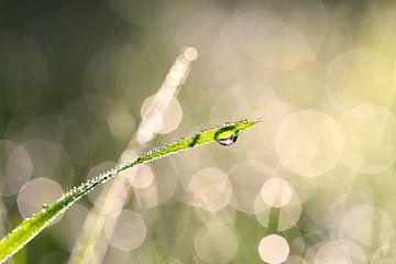 Tautropfen im Gras von Jana Behr