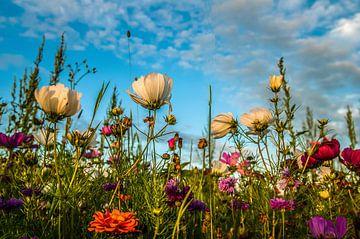 FlowerPower sur Leo van Vliet
