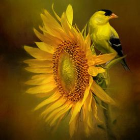 Goudsijs - Geel Zwarte Vogel Op Zonnebloem van Diana van Tankeren