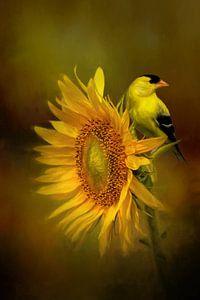 Goldspeiseeis auf Sonnenblume von Diana van Tankeren