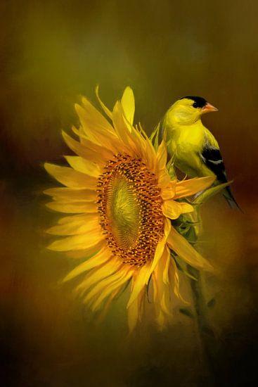 Goudsijs - Geel Zwarte Vogel Op Zonnebloem