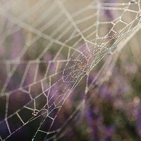 Spinneweb op de heide. van Sean Vos