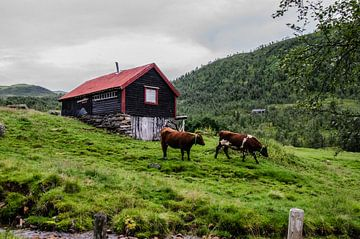 Typsiche Noorwegen van MaxDijk Fotografie