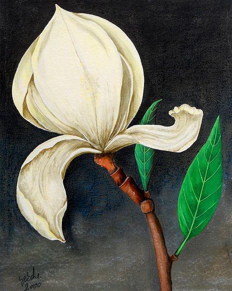 Magnolie von Gertrud Scheffler