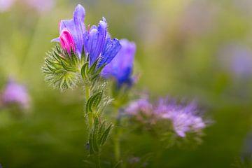 Bloemenweide, bloemenwilg van Karin Luttmer