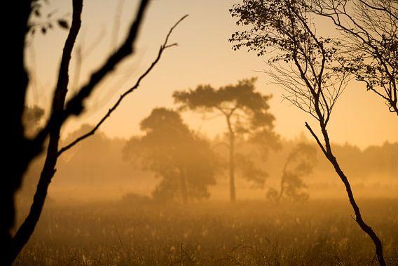 Strabrechtse Heide 256 van Desh amer