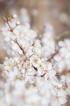 Witte Bloesem von Marjan Kooistra