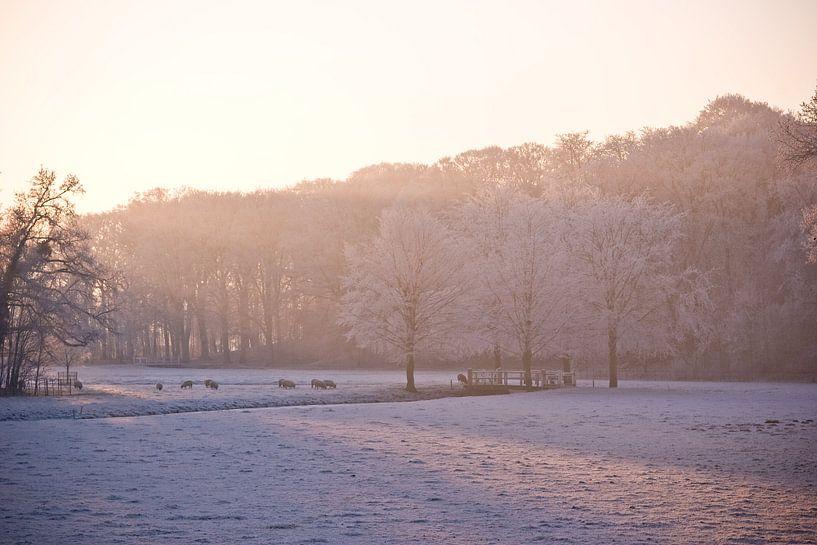 Winter Wonderland van Jasper van der Meij