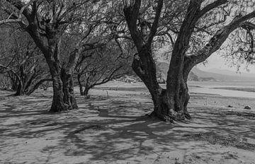 Tamarindes brengen schaduw op het hete strand in zwart-wit van Bep van Pelt- Verkuil