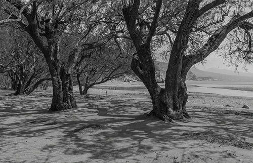 Tamarindes brengen schaduw op het hete strand in zwart-wit