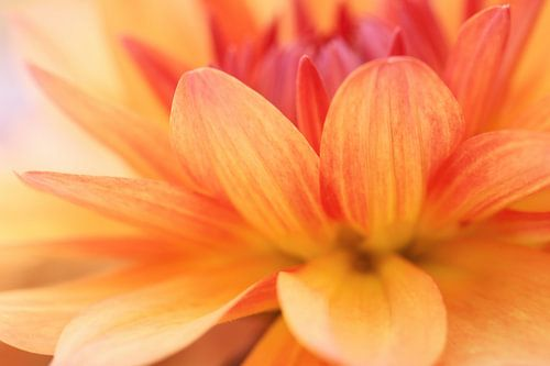 Geel rood gekleurde dahlia van LHJB Photography