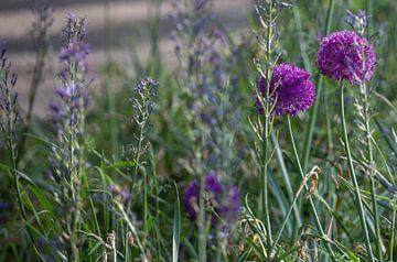 Veld met bloemen von Marina de Jonge