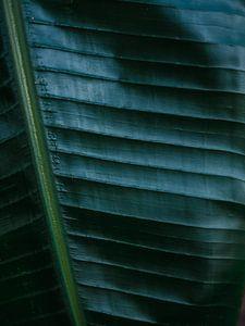 Donkergroen palmblad | Botanische foto print voor aan de muur