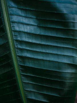 Botanische Fotografie drucken | Dunkelgrünes tropisches Blatt einer Palme | Dschungel-Wanderlust-Kun von Raisa Zwart