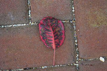Red leaf van Bas Dijk