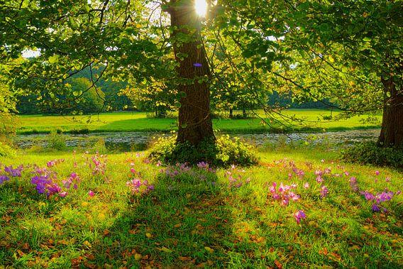 Herfsttijloos en lindeboom