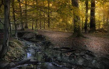 Bos in de herfst van Dieter Beselt
