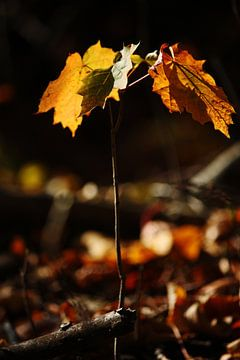 golden fall VI van Meleah Fotografie